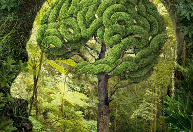 Tete arbre